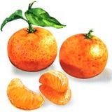 Reife Tangerine oder Klementine mit grünem Blatt, orange Zitrusfrüchte abgezogene Segmente, lokalisiert, Aquarellillustration stock abbildung