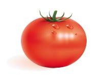 Reife Tomate Lizenzfreie Abbildung