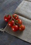 Reife Tomate der Rebe Lizenzfreie Stockfotos