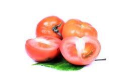 Reife Tomaten Stockbilder