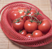Reife Tomaten in einem roten Korb Bündel Tomaten Stockbilder