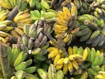 Reife u. unausgereifte Borneo-Bananen Stockbilder