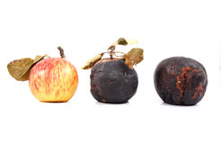 Reife und faule Äpfel mit trockenem Urlaub Stockfotos