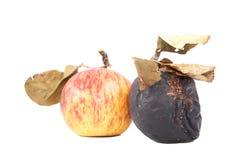 Reife und faule Äpfel mit trockenen Blättern Lizenzfreies Stockbild
