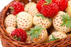 Reife weiße und rote Erdbeeren im Korb Lizenzfreie Stockbilder