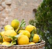 Reife Zitronen in der Schüssel lizenzfreie stockfotos