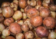 Reife Zwiebeln als Hintergrund Stockbild