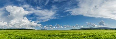 Reifendes Weizenfeld des Panoramas Stockbild