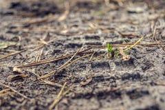 Reifenimpressum im Sand Lizenzfreie Stockbilder