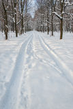 Reifenspur auf Schnee im Winterpark Stockfotografie
