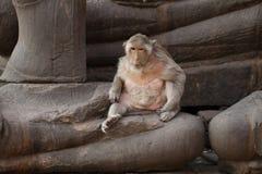 Reifer Affe, der auf alter schädigender Buddha-Statue, offene alte Tierwild lebende tiere, Säugetier auf historischem Reiseziel s Stockbilder