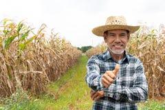 Reifer asiatischer Landwirt, der sich Daumen zeigt lizenzfreie stockbilder