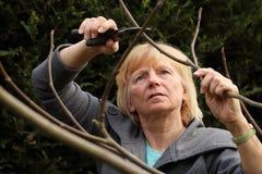 Reifer Frauenbeschneidungsfeigenbaum 2 Lizenzfreies Stockbild