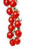 Reifer frischer Cherry Tomatoes auf der Niederlassung lokalisiert auf weißem Hintergrund Stockfotos