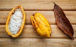 Reifer Indonesien-Kakao Stockfotografie