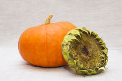 Reifer Kürbis mit einem leeren sunflower's Kopf Lizenzfreie Stockfotografie
