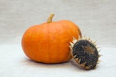 Reifer Kürbis und sunflower's Kopf Lizenzfreie Stockfotografie