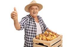 Reifer Landwirt, der Kiste hält und einen Daumen aufgibt Stockfotos