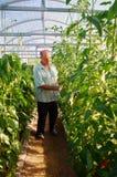 Reifer männlicher Gärtner, der im Gewächshausgarten arbeitet Stockbilder