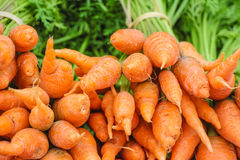 Reifer neuer Karottenhintergrund Stockfotos