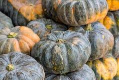 Reifer orange-grüner Kürbis stockfotografie