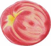 Reifer Pfirsich Gezeichnet mit farbigen Bleistiften lizenzfreie abbildung