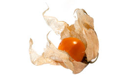 Reifer Physalis Stockbild