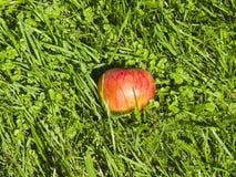 Reifer roter Apfel im Gras, selektiver Fokus, flacher DOF Stockfoto