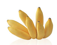 Reifer Schätzchen-Bananen-Cluster Stockbilder