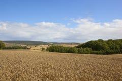 Reifer Weizen und Waldland Stockbild