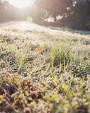 Reifgras in hintergrundbeleuchtetem Sonneneruption Lizenzfreie Stockbilder