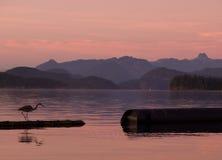 Reiger die bij zonsondergang in de Discover Eilanden vist Royalty-vrije Stock Foto