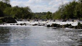 Reiger die en een vis vangen eten terwijl meeuwen die boven vliegen stock footage