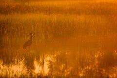 Reiger die zich in overstroomd moerasland bevinden dat door oranje Afrikaanse zonsopgang wordt gecamoufleerd royalty-vrije stock foto's