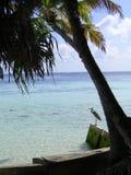 Reiger onder palm royalty-vrije stock afbeeldingen