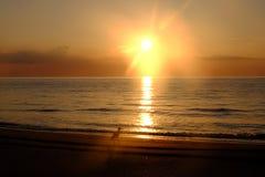 Reiger op een strand bij zonsopgang Stock Fotografie