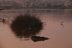 Reigers in stedelijke zoutwatervijver, Angola, Afrika stock foto