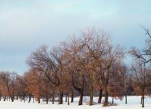 Reihe der Bäume Lizenzfreies Stockbild