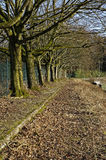 Reihe der Bäume Lizenzfreies Stockfoto