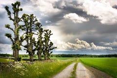 Reihe der Bäume Stockbild