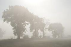 Reihe der Bäume im Nebel stockfotografie