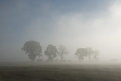 Reihe der Bäume im Nebel stockfotos