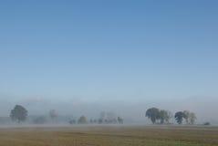 Reihe der Bäume und des Hedgerow im Nebel lizenzfreie stockfotografie