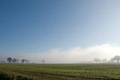 Reihe der Bäume und des Hedgerow im Nebel lizenzfreie stockfotos