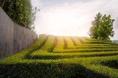 Reihe der Baumbehandlung, im Garten arbeitender Park, grüner Park mit Sonnenuntergang lizenzfreies stockfoto