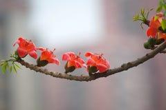 Reihe der Blumen Stockfotos