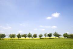 Reihe der Bäume Stockbilder