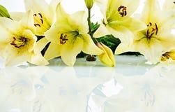 Reihe der Daylilyblüte über weißem Hintergrund Lizenzfreies Stockbild