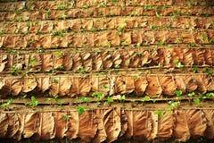 Reihe der Erdbeere bewirtschaftet in Chiang Mai, Thailand Stockfotografie