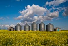 Reihe der Kornstauräume auf einem gelben Gebiet Stockfotografie